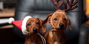 Animal Jigsaw Puzzles: Christmas Pets