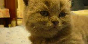 An Adorable Kitten Suddenly Falls Asleep