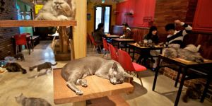 Everything Is Purrfect In Japan's Cat Cafes