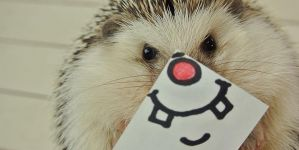 Hedgehog Faces: The Cutest Thing On Twitter Right Now!