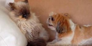 Dogs Annoying Cats With Their Friendship!