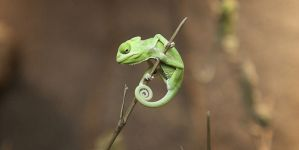 Animal Jigsaw Puzzles: Cute Baby Chameleon