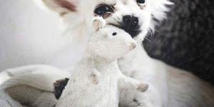 Animal Jigsaw Puzzles: Long Hair Chihuahua
