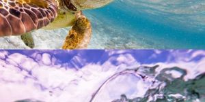 Animal Cuteness Battle - Turtle vs Seal