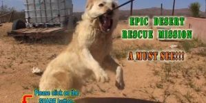 Epic Dog Rescue In the Mojave Desert By Hope For Paws