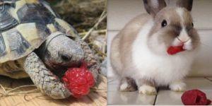 Animal Cuteness Battle - Bunny vs Turtle