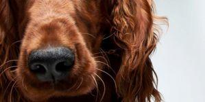 Stunning Dog Portraits By Gerrard Gethings