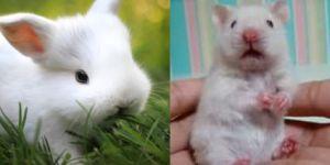 Animal Cuteness Battle - Fluffy White Bunny vs Cute White Mouse