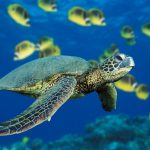 The Sea Turtles