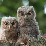Animal Jigsaw Puzzles: Cute Baby Owls