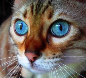 most beautiful cats on stumbleupon 14