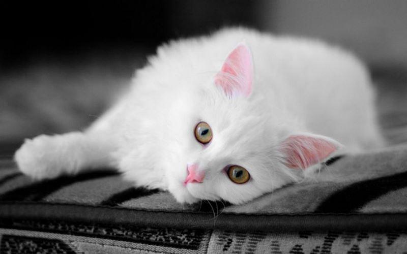 most beautiful cats on stumbleupon 16