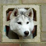 15 Dogs Who Need Some Help