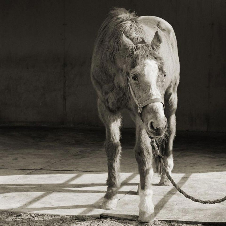 Touching Portraits Of Older Animals