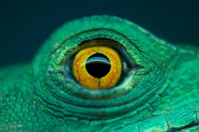 animal eye1