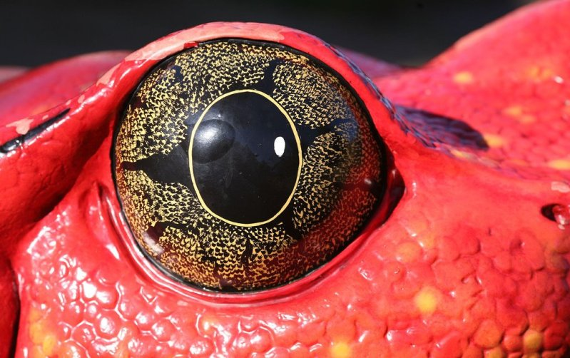animal eye10