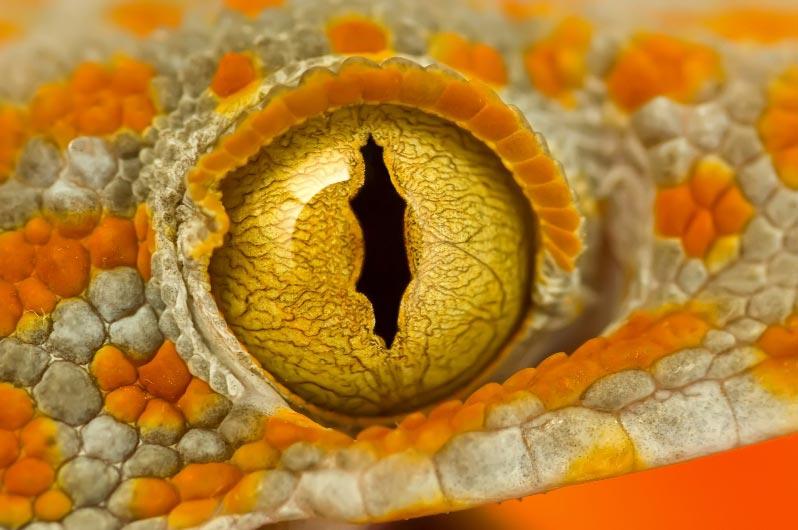 animal eye14