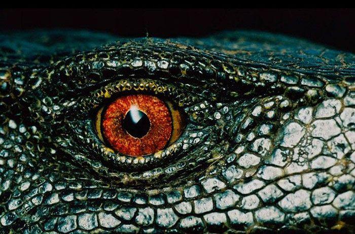 animal eye8