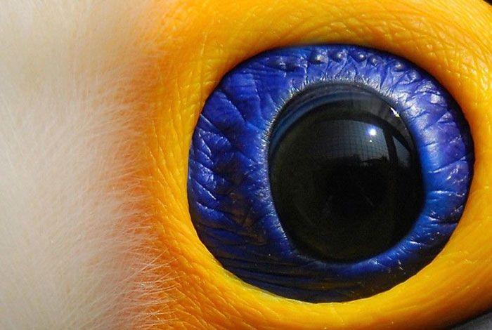 animal eye9