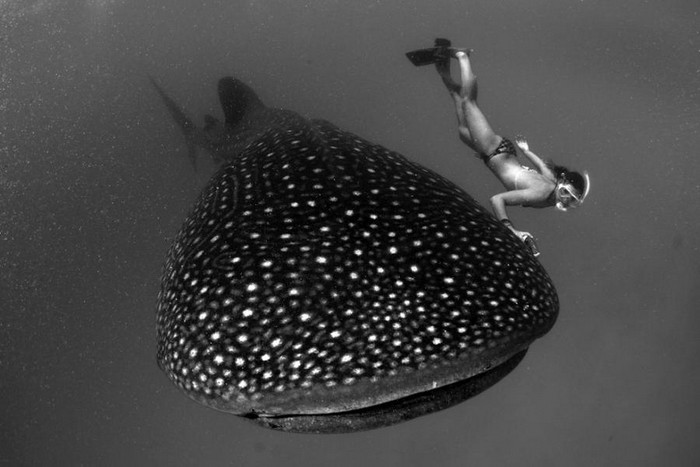 10 Places To Swim With Whale Sharks