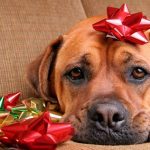 15 Most Beautiful Christmas Dog Photos