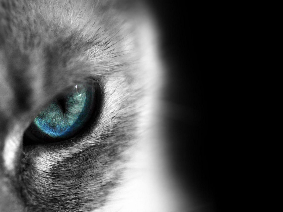Articles On Cats Eyes