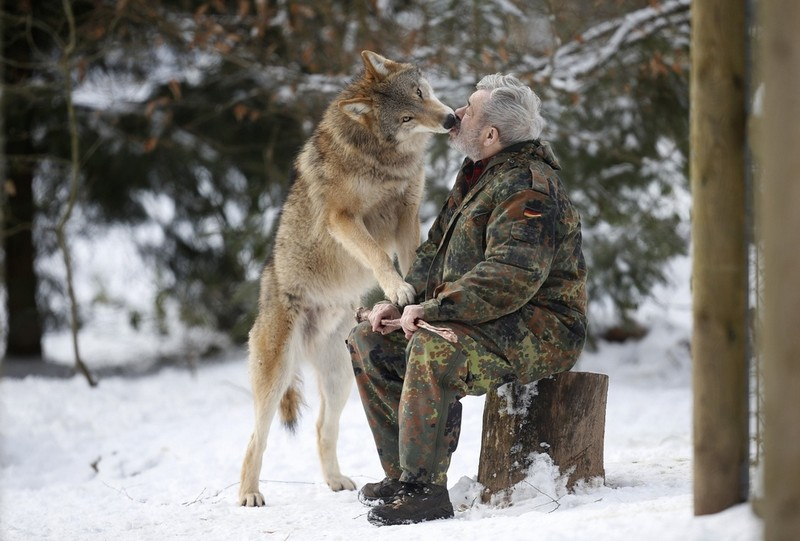 10 Stunning Photographs Of Wolves And The Man Who Lives Among Them