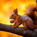 Cute, Funny, Hungry Squirrels