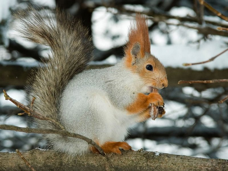 Cute funny hungry squirrels - Funny squirrel backgrounds ...