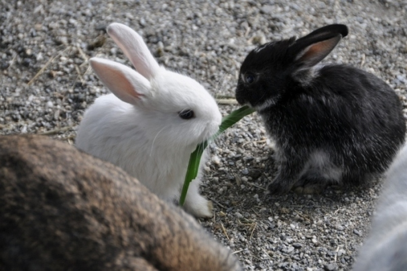 Surprising Things That Bunnies Do