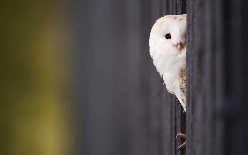 15 Cute Peek A Boo