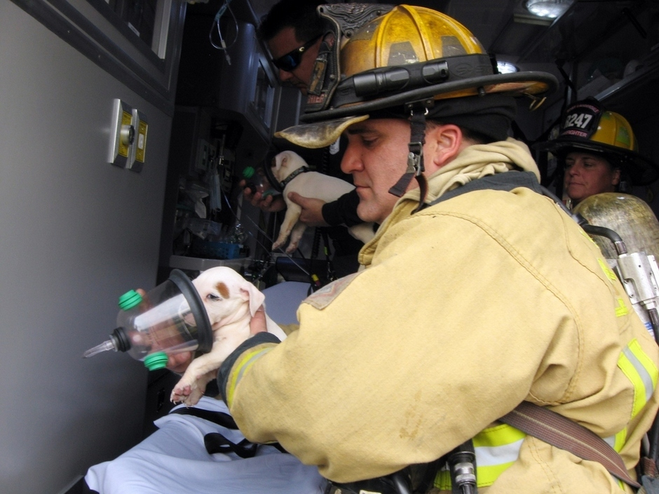 two-tiny-puppies-were-saved-from-a-fire-in-florida