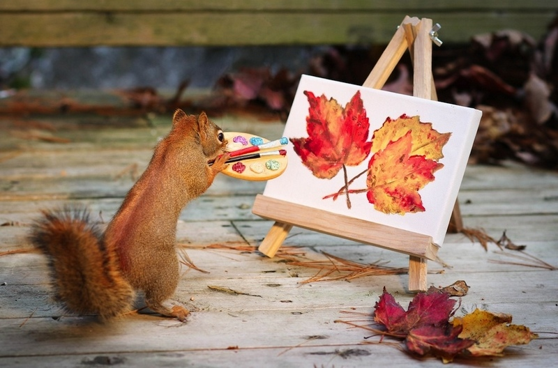 9 Things The Squirrels Are Up To These Days