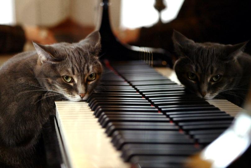 20 Piano cat