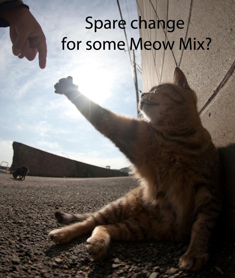20 begging cat