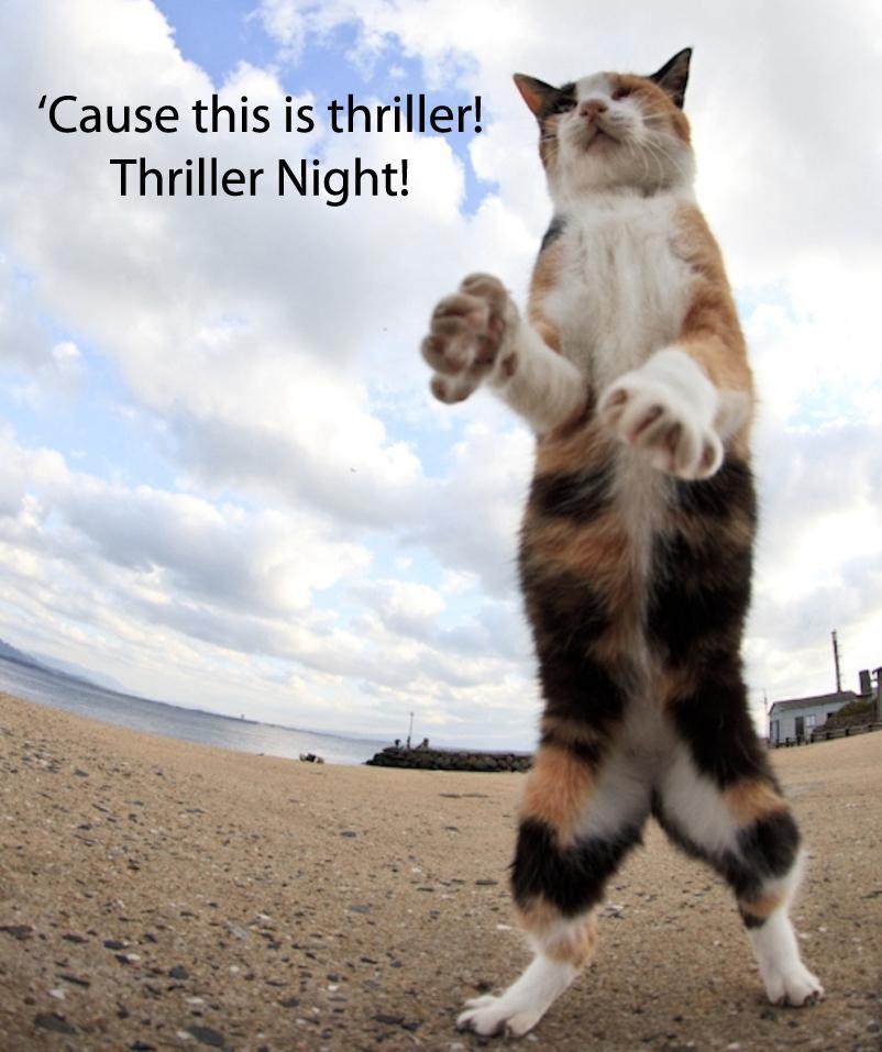 20 dancing cat