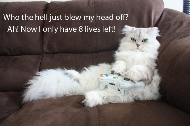 20 gamer cat2