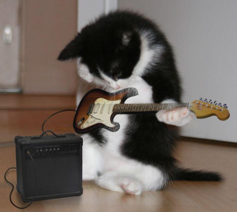 20 guitar cat