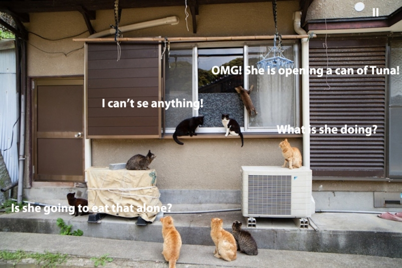 20 peeping cats