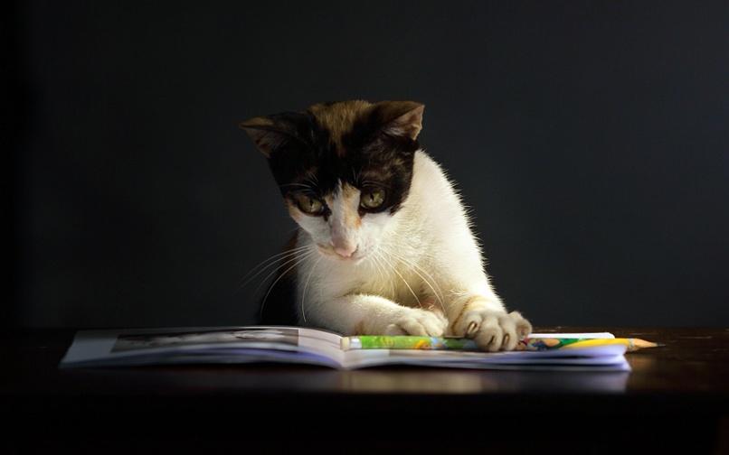 20 reading cat