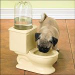 Dog Drinking In The Toilet? No Problem!
