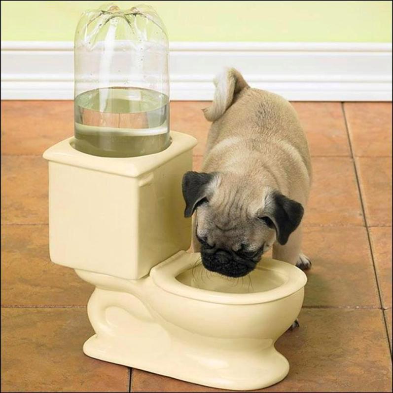 Dog toilet bowl 3