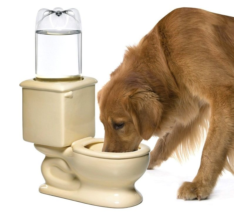 Dog Drinking In The Toilet No Problem