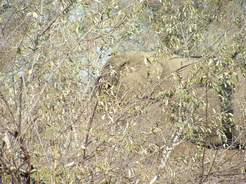 Camouflage animal6