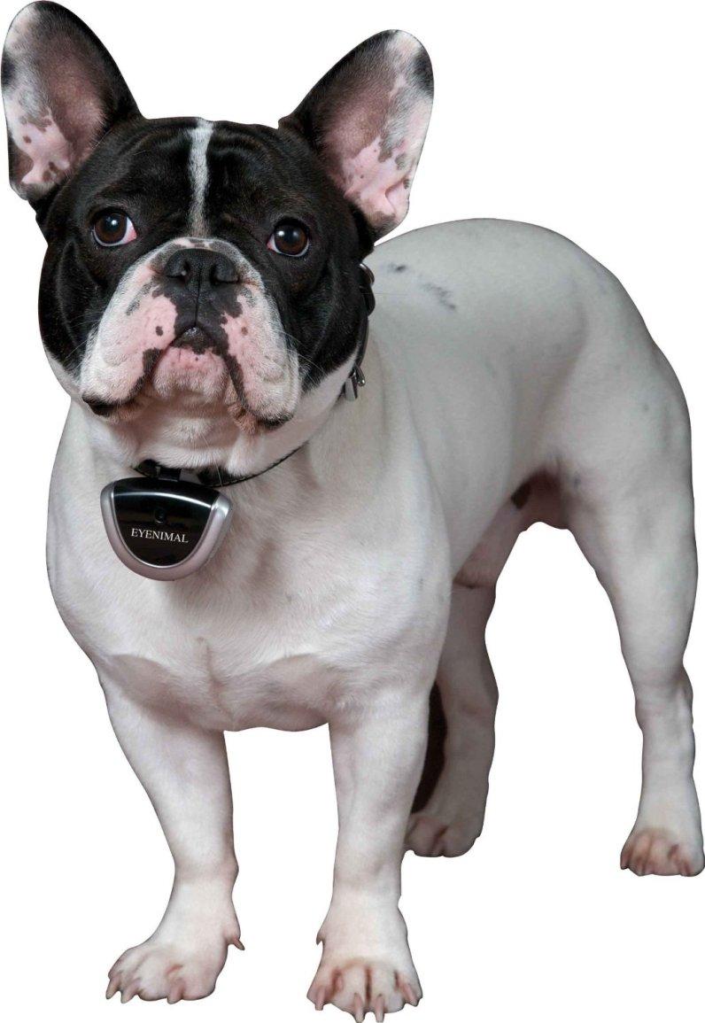 DogTek Eyenimal Camera