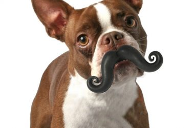 Mustache Ball Dog Toy, Awesome!