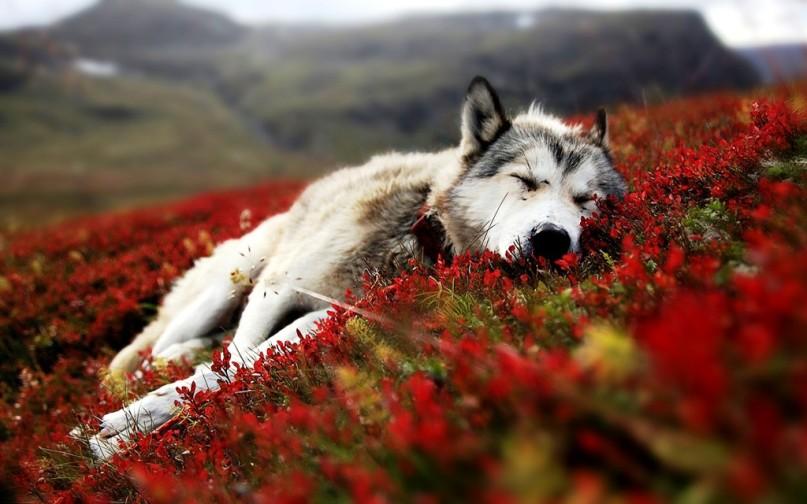 Sleeping beauties11