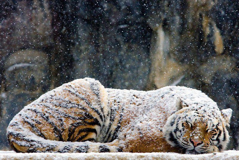 Sleeping beauties19