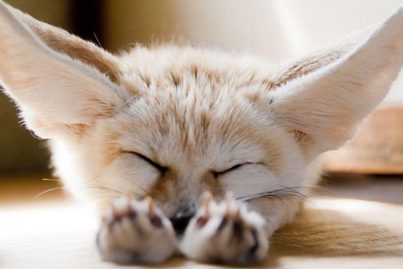 Sleeping beauties2