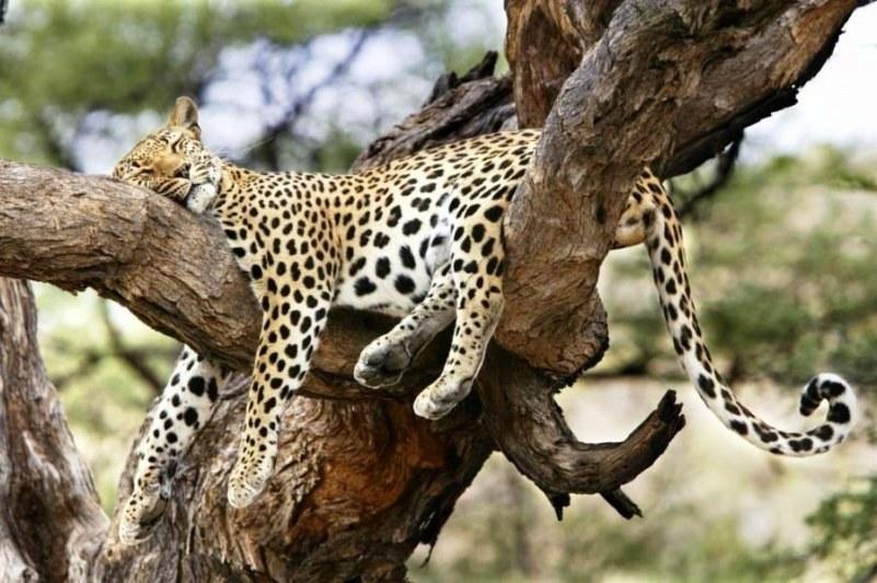 Sleeping beauties4